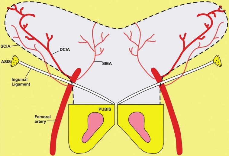 Figure 1: Vascular supply to the
